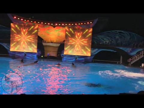 Shamu Celebration Light Up the Night at SeaWorld Orlando Full Show HD