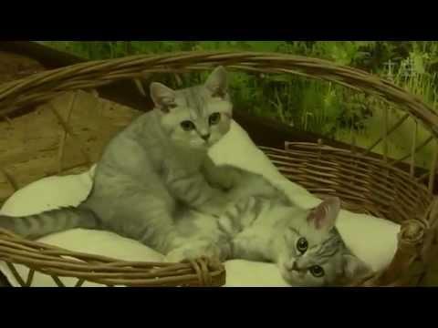 Глисты у кошек и котят. Как избавиться от глистов Кошка 12
