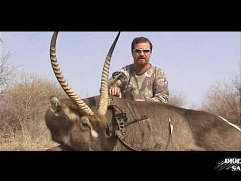 Africa's Best Bowhunts Volume 2