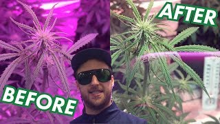 LED Grow Room Glasses by MarsHydro | Protect your Eyes from Powerful Grow Lights