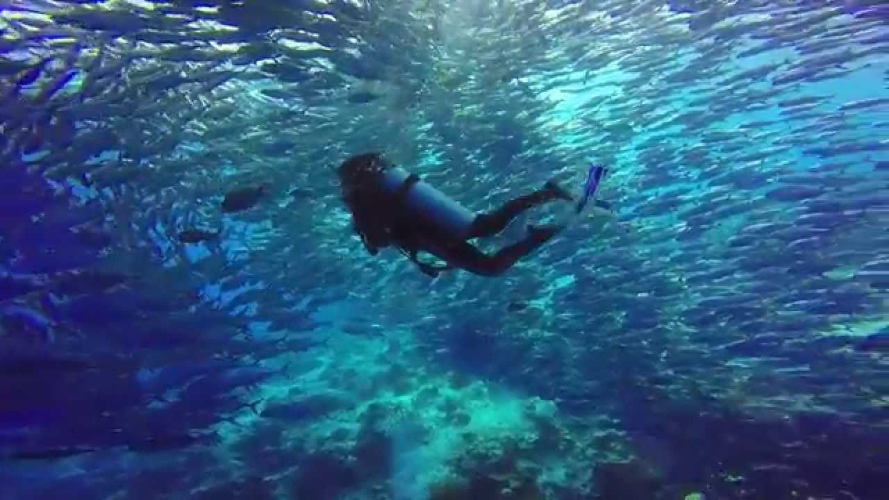 Wonderful Diving In Sipadan Island 2015