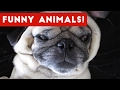 Funniest Pet Clips  Bloopers  amp  Moments Caught On Tape 2017   Funny Pet Videos