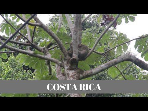 TYH 1498 HD COSTA RICA