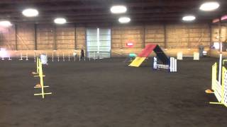 Field Spaniel Agility Event Saturday Ex Std
