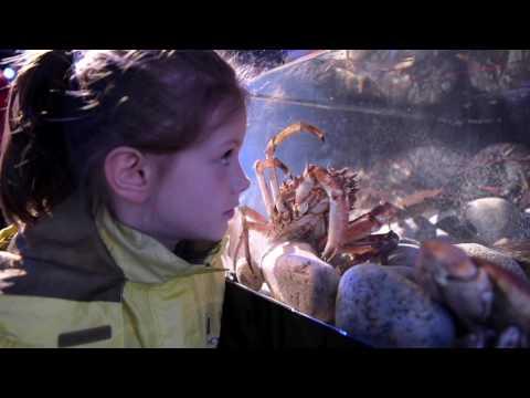 SeaFest 2016 Galway  Marine Institute