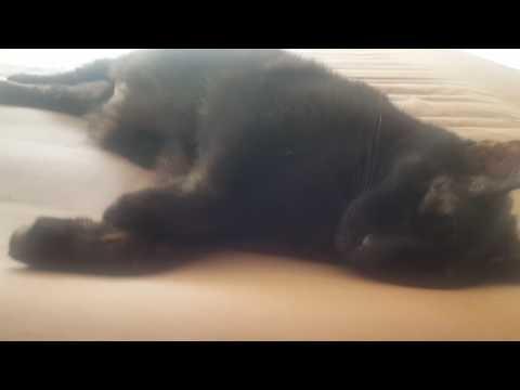 Lucky Snoring
