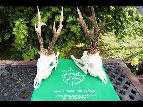 Roe Buck Hunting 2018 - PREMIERE! Www.UltimateHunting.eu
