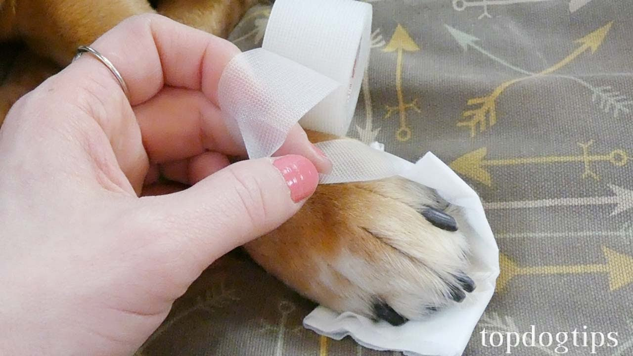 How To Treat A Dog Wound Dog First Aid Tips Youtube