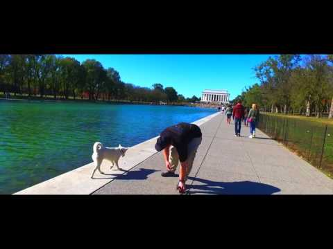 Husky, Ghost!  Off Leash In Times Square and Washington DC! Best Husky Dog Training   Off Leash K9