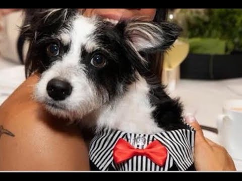 Special needs pup waiting almost a year for forever home| The Dodo Project Home LIVE