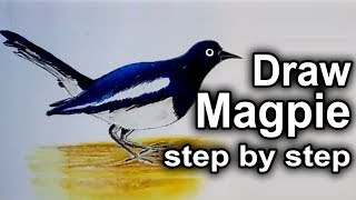 How to draw Magpie step by step: Draw a bird magpie: Draw Magpie
