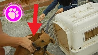 Dog Survives Car Accident - Animal Rescue on Curacao