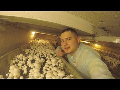 Саженцы растений и мицелии грибов от Агроном