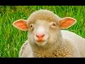 Sonidos de Animales para niños * Aprender y divertirse!