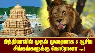 இந்தியாவில் முதல் முறையாக 8 ஆசிய சிங்கங்களுக்கு கொரோனா தொற்று உறுதி செய்யப்பட்டுள்ளது