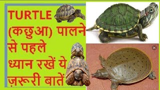 turtle care Hindi/Urdu कछुआ/टृटल