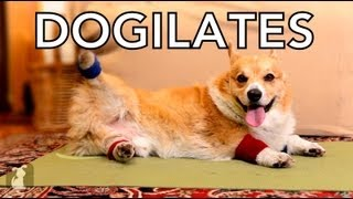 Dogilates: K90x