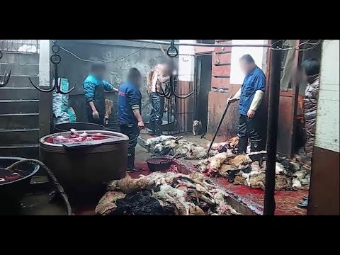 Animal Cruelty In Chinese Dog Leather Industry