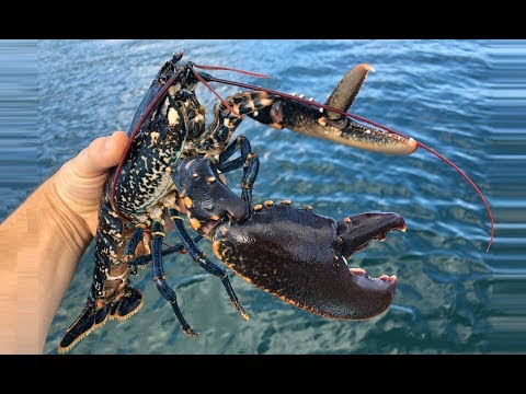 Hauling Homemade Lobster And Crab Pots- Cornwall