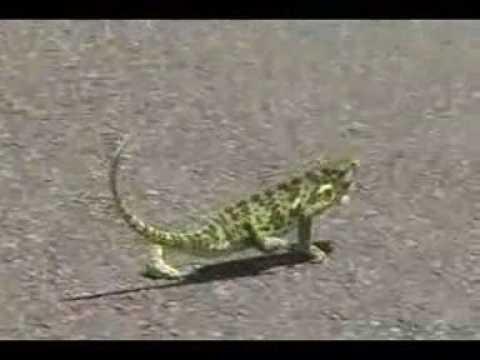Chameleon remix 50 Cent