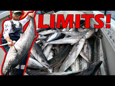 Commercial Fishing Payday! - Kingfish Limit