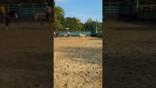 1ere x bétail