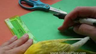 Eco Craft:  Paper Parakeet Toy