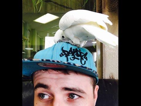 AZ Exotic Bird Rescue, Inc. Parrots Full of Life