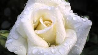 Букет из белых роз - Ирина Круг и Виктор Королёв