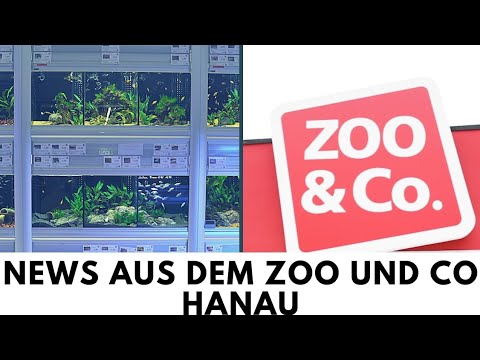 news aus dem zoo und co hanau youtube. Black Bedroom Furniture Sets. Home Design Ideas