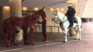 War Horse-Joey interacts with a real horse