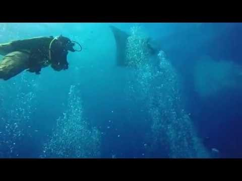 Our Dive Trips | Manta Ray - Costa Rica