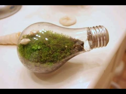 micro terrarium diy funnycat tv. Black Bedroom Furniture Sets. Home Design Ideas