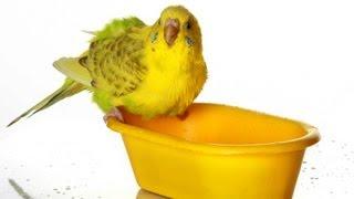 How to Bathe a Bird   Pet Bird