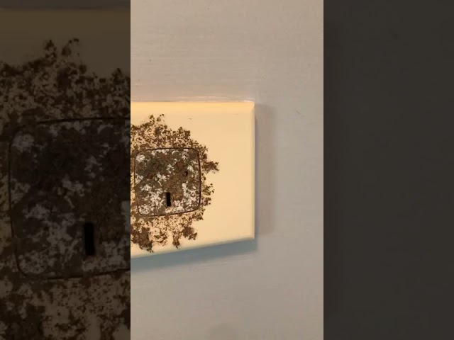 Active termites into a PowerPoint and storage cupboard
