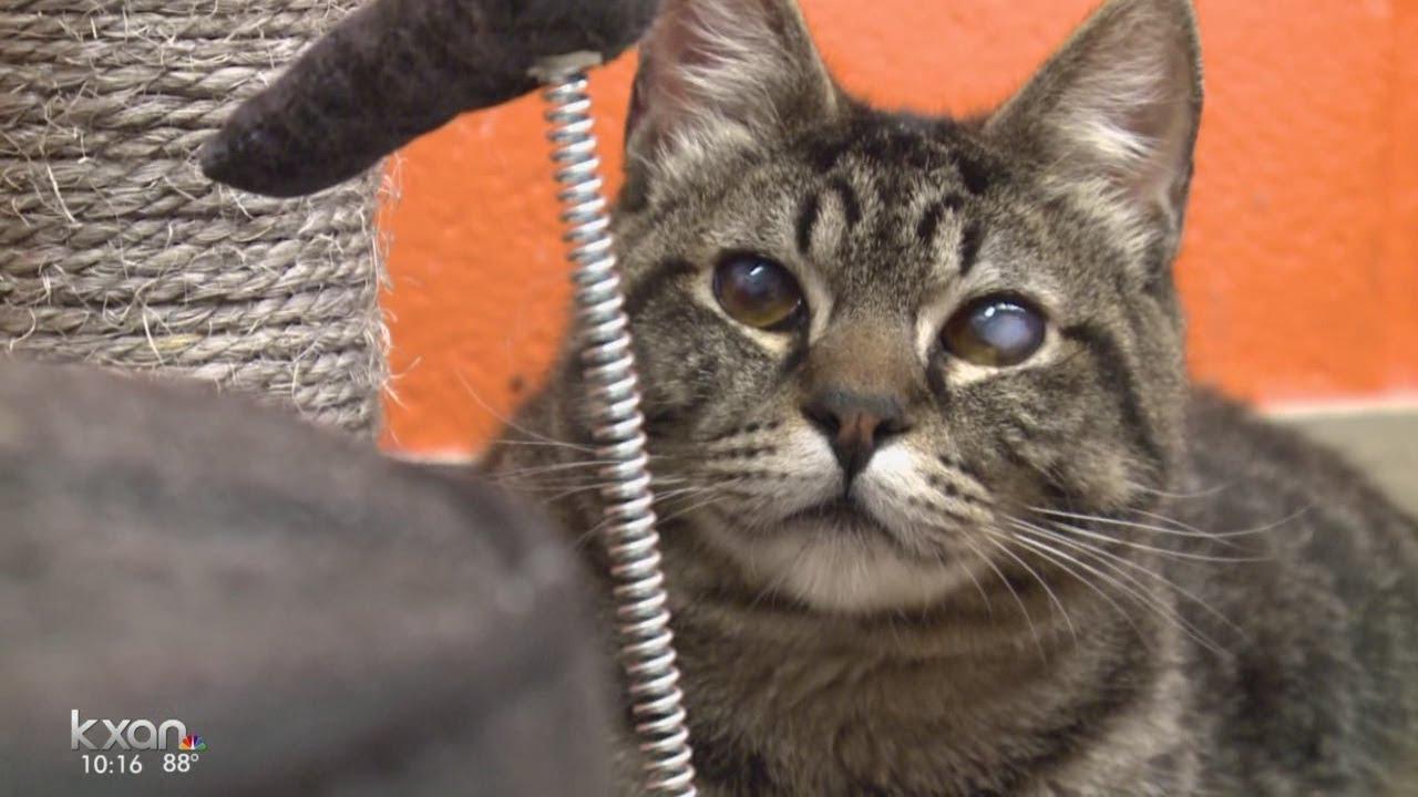 Austin Program Saving Cats With Leukemia That Are Euthanized Elsewhere