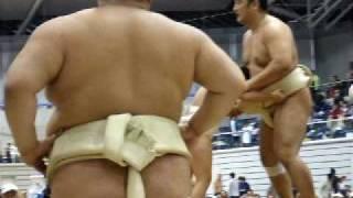 安美錦関、ジャイアントスイングに自ら目が回る!?(@▽@)(2008年秋:熊谷...