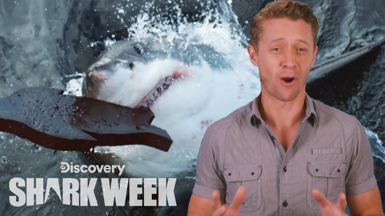 A New Great White Discovery | Shark Week's The Daily Bite