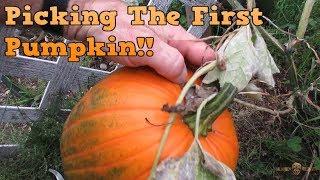 Picking The First Pumpkin!!! [Day 2881 - 09.20.18]