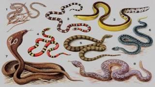 Пресмыкающиеся, или рептилии (рассказывают Иван Ермолов и Михаил Беляев)