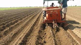 Potato Cultivation in assam