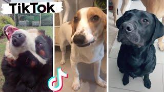 Best Doggos on TikTok ~ Cutest & Funniest Dogs Compilation
