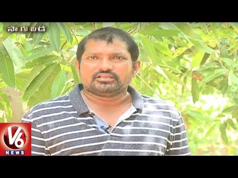 Success Story Of Organic Farmer Rajashekar Reddy | Karimnagar District | Sagubadi | V6 News