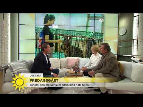 """Därför ska du INTE ta bilder med djur på semestern: """"Det här är djurplågeri"""" - Nyhetsmorgon (TV4)"""