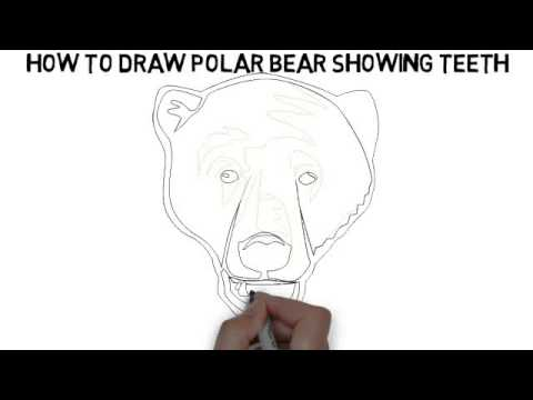 how to draw polar bear showing teeth quickly and easily youtube