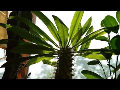 Быстро ли растут кактусы?