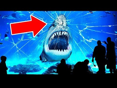 Por Qué NINGÚN Acuario Del Mundo Tiene Un Tiburón Blanco