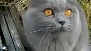 Смешные животные! Говорящий кот!