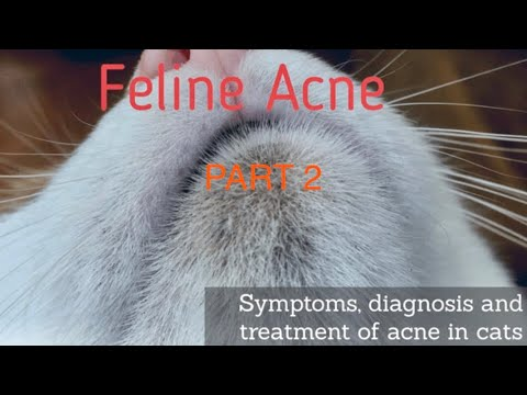 Cat Acne Treatment Pt2 Of 1 Youtube