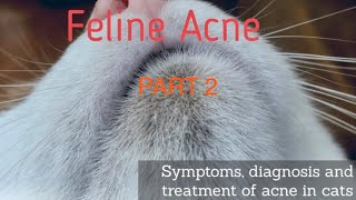 CHIN ACNE TREATMENT ON CATS - PART 2 TREATMENT